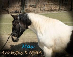 Max_edited-1-1
